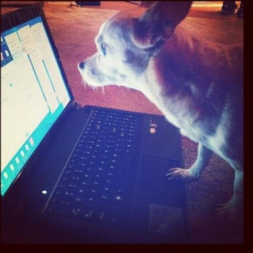 Mocha The Chihuahua's avatar