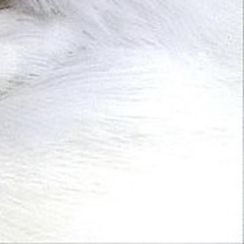 Gully Records's avatar