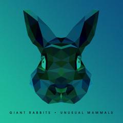 Giant Rabbits!