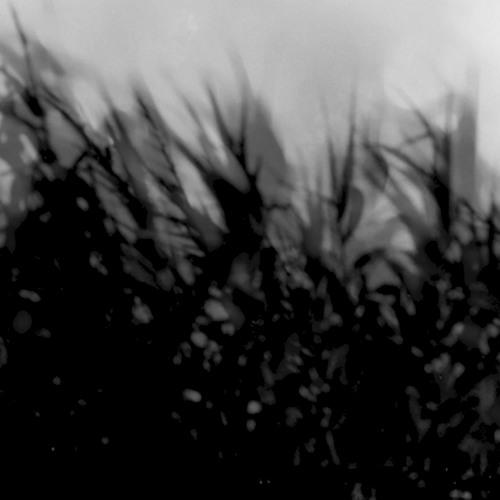 apoisontree's avatar