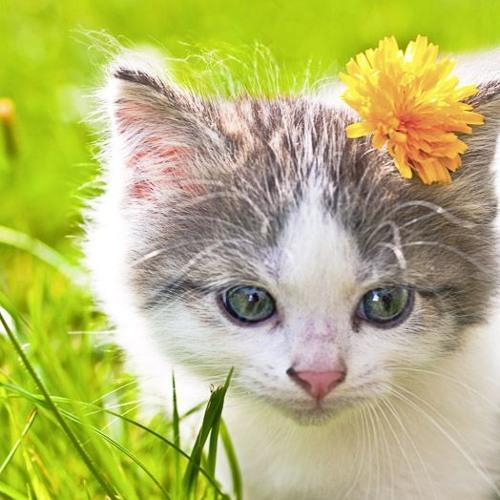 Tininha Gatinha Miau's avatar