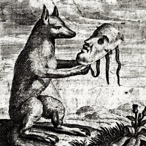 jakkals wolk's avatar