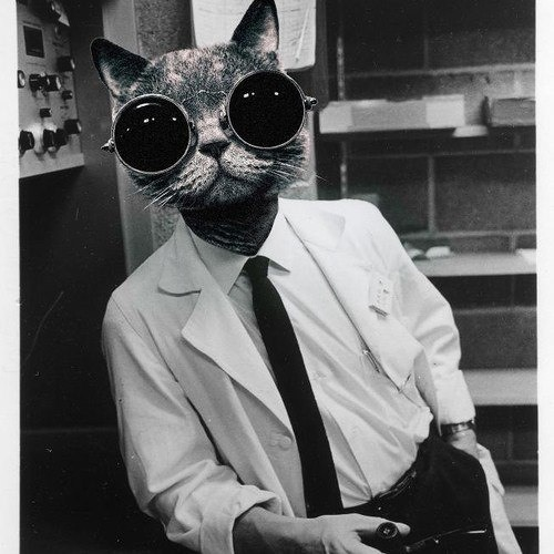 Polly Stripe's avatar