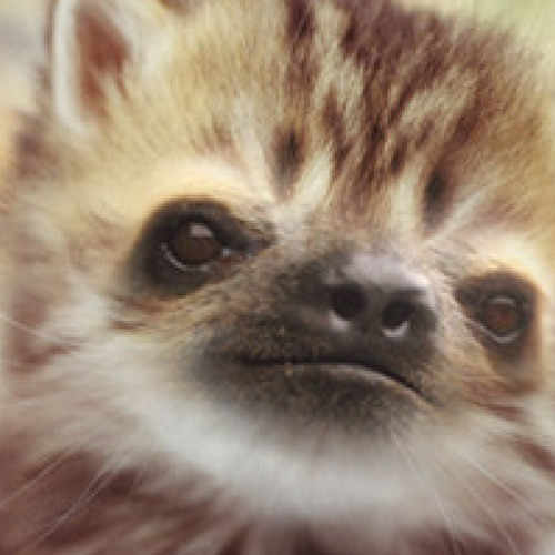 slothkat's avatar