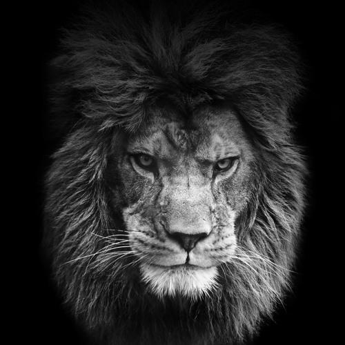 Leone Music's avatar