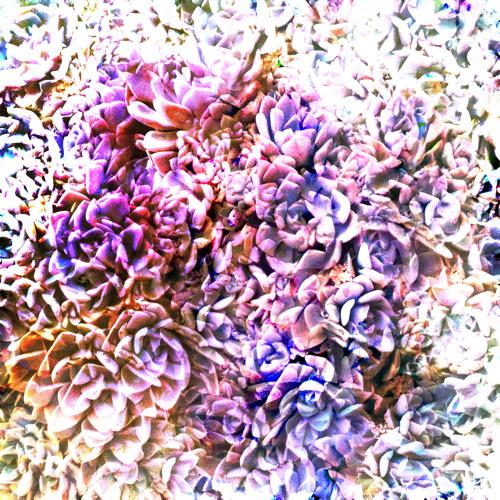 (Heavenly Prince)Imagine featuring Hayley Zuercher