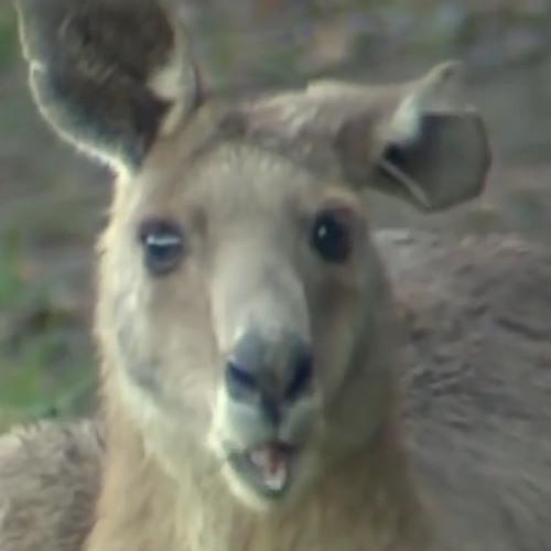 Florawe's avatar