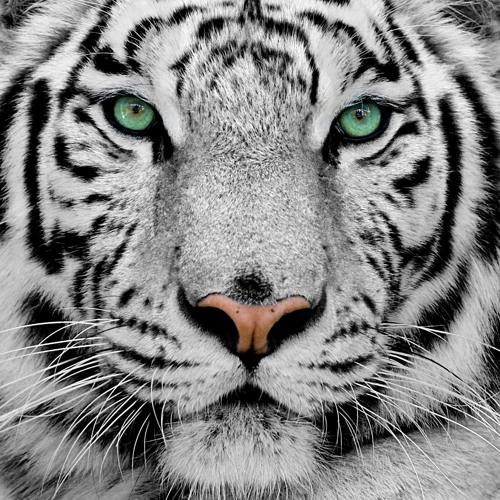Mario Balukcic's avatar