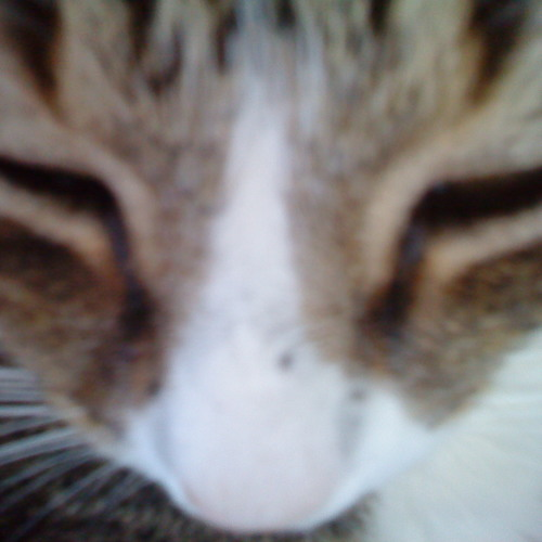 Mogo Gut's avatar