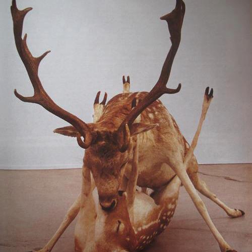 Lœp De Lœp's avatar