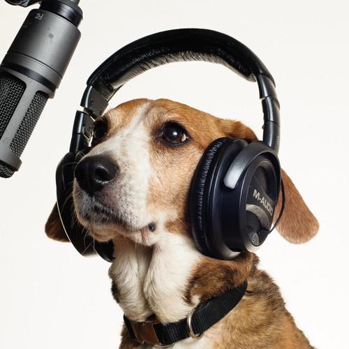 baileythebeagle's avatar