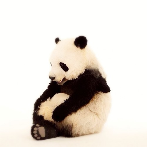 pandakeikomix's avatar