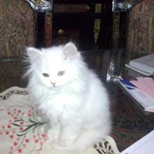 Mohammed Alotaibi's avatar