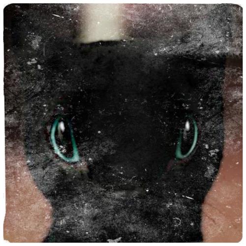 Kingston Bishop's avatar