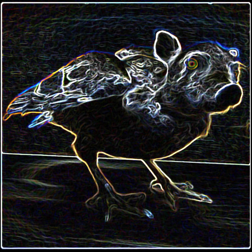 Bumpy'Z Bruit's avatar