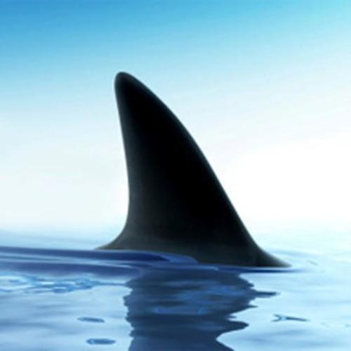 SharkSound's avatar