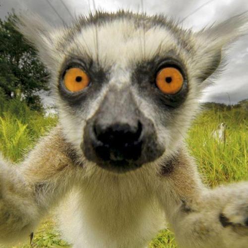 Doctor Lemur's avatar