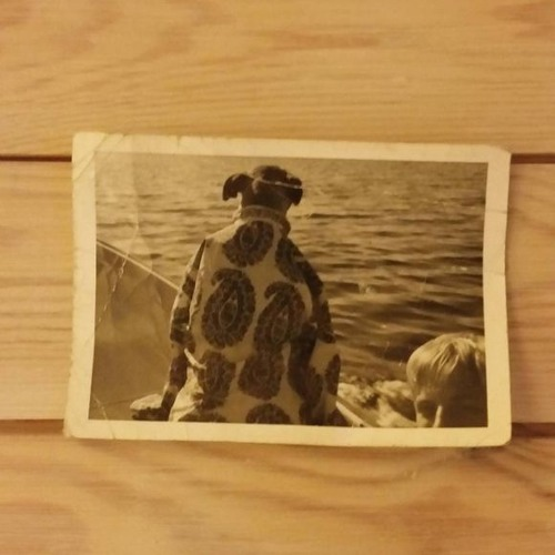 Dog of Man's avatar