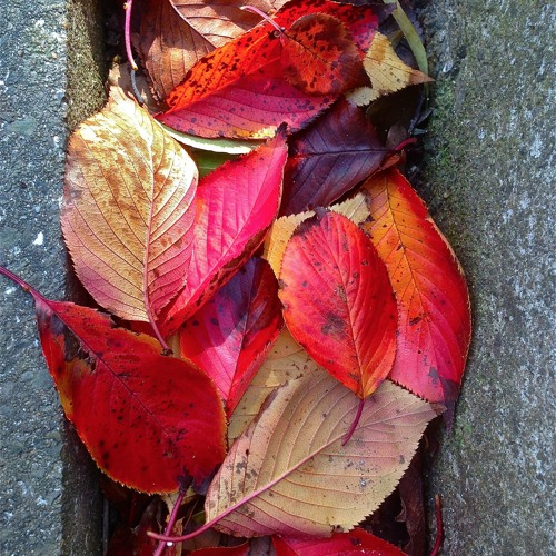 Autumn Leaves-Free Your Soul