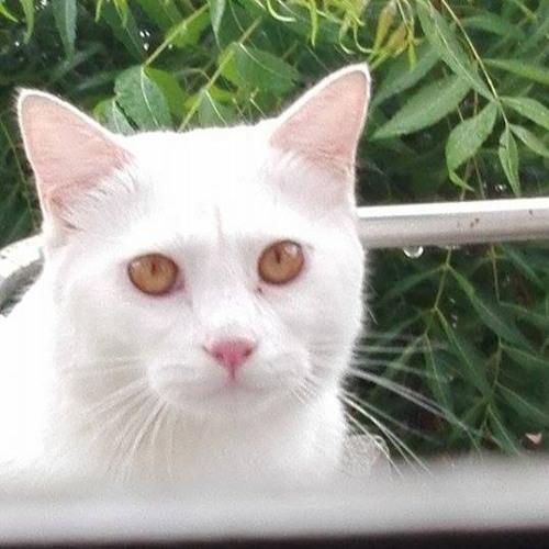 Suleman Kiyani's avatar