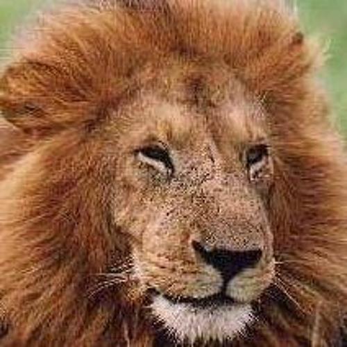 Dave Adry's avatar