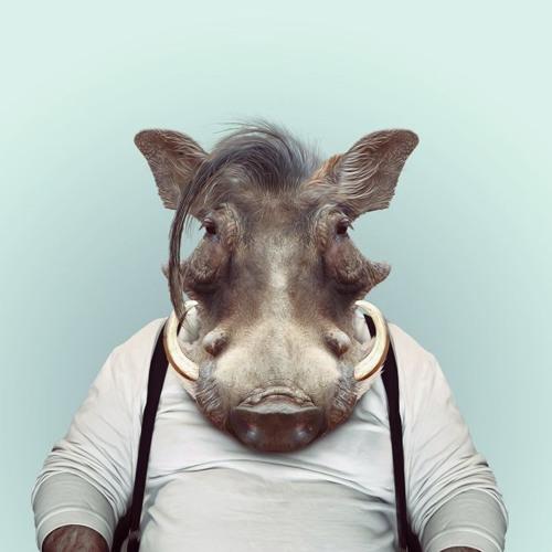 Wayne Holland's avatar