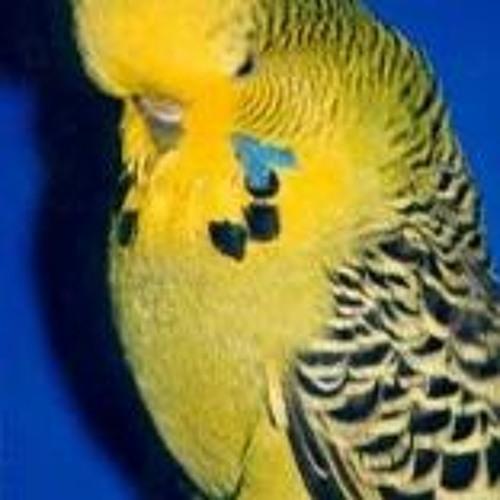Grande Parakeet's avatar