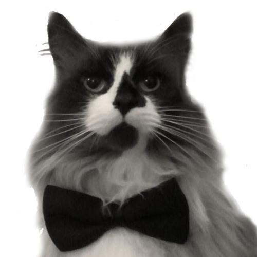 Cat's Corner Sextet's avatar
