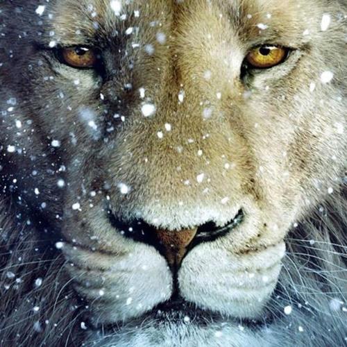 Majestic Lion's avatar