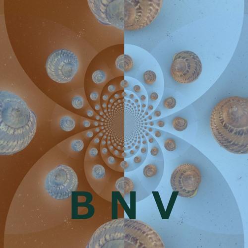 B N V's avatar