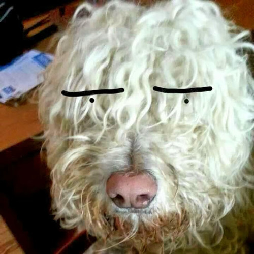 bobmassbob's avatar