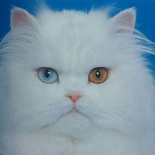 CATCLUB's avatar