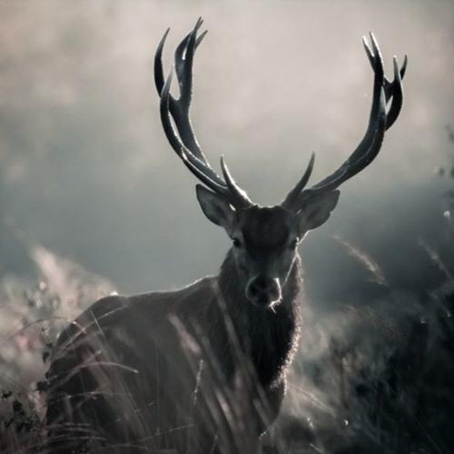 Eville81's avatar