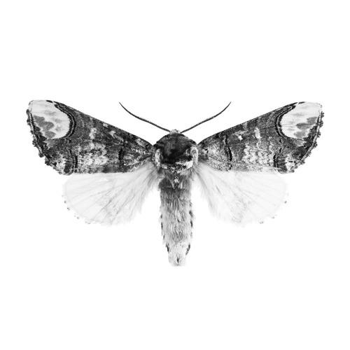 Mia Wallace Chicago's avatar