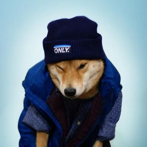 Ookami's avatar