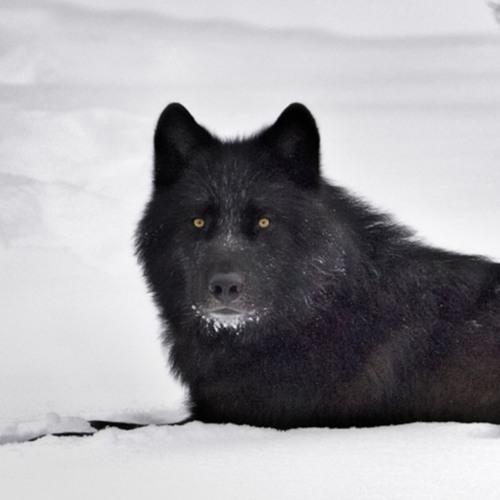 Wolf_Fyodor(444)'s avatar