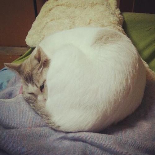 毛玉 / Kedama's avatar