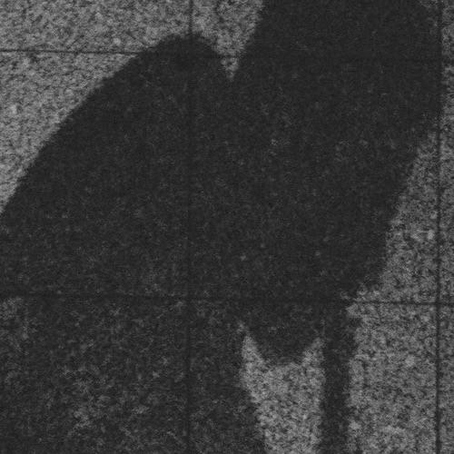 mr_mr's avatar