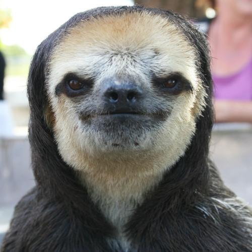 L'Animal's avatar