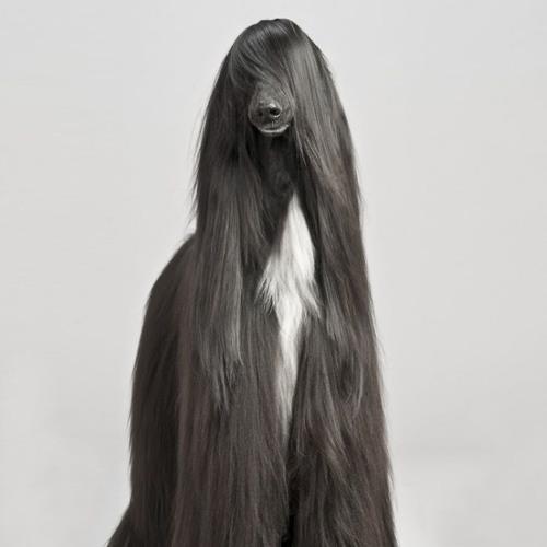 Harold Mge's avatar