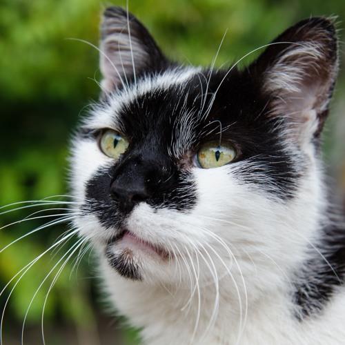 Paladin Cat's avatar