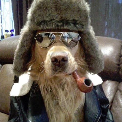 Grizz's avatar
