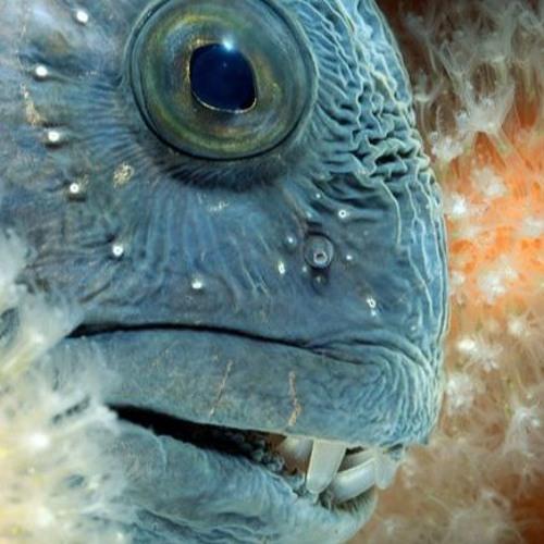 Cold Fish's avatar