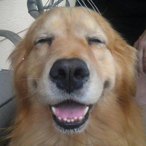 BrIzzyJ's avatar