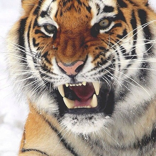 UDAY's avatar