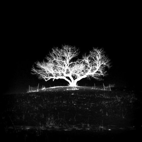 White Tree Records's avatar