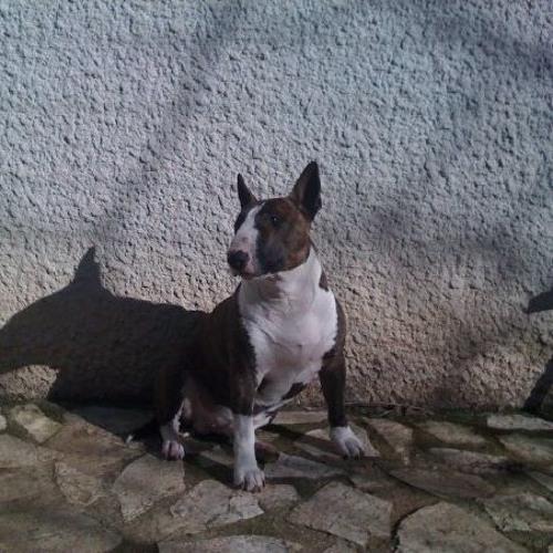 zxu944's avatar