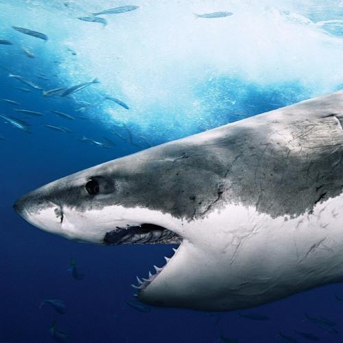 SharkBait's avatar