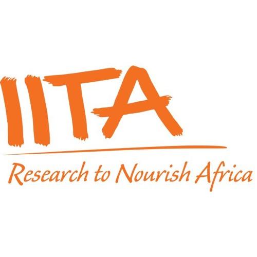 IITA's avatar