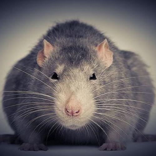 Simonreze's avatar